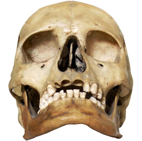 image of skull HD