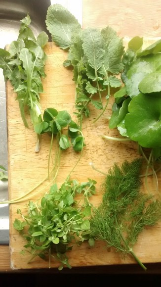 Dandelion leaves, Radish leaves, Oxalis, Chickweed and Fennel