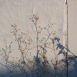 The Pursuits of Picnics & A Life Less Complicated