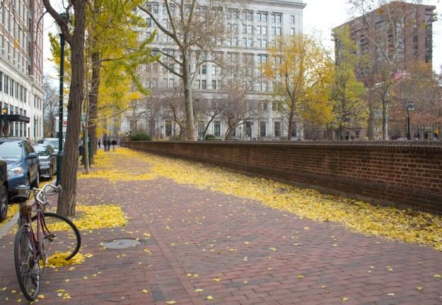Bike and Leaves