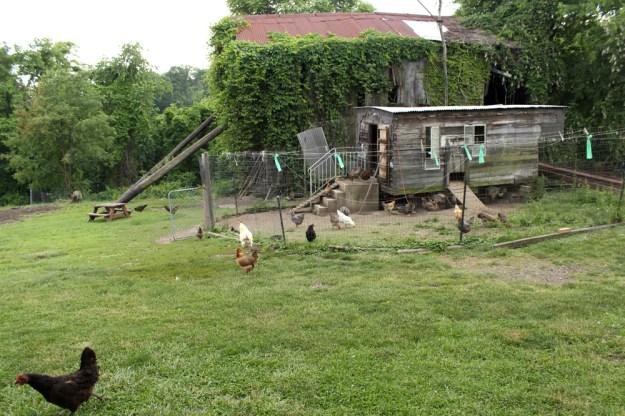 Chicken Caravan