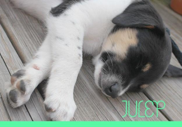 Introducing-Julep