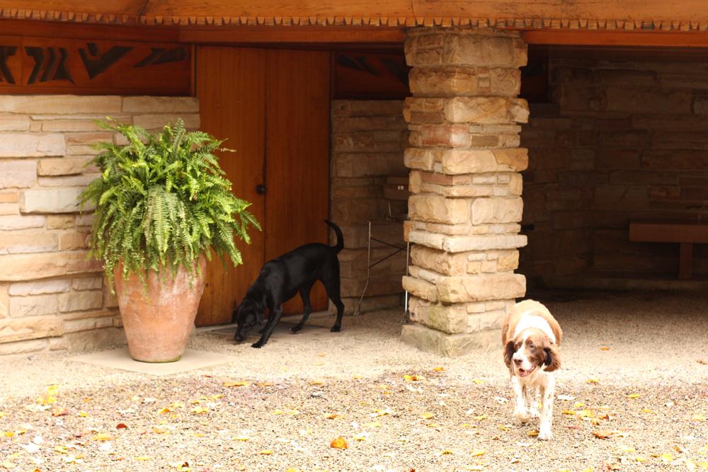 Palumbo Dogs