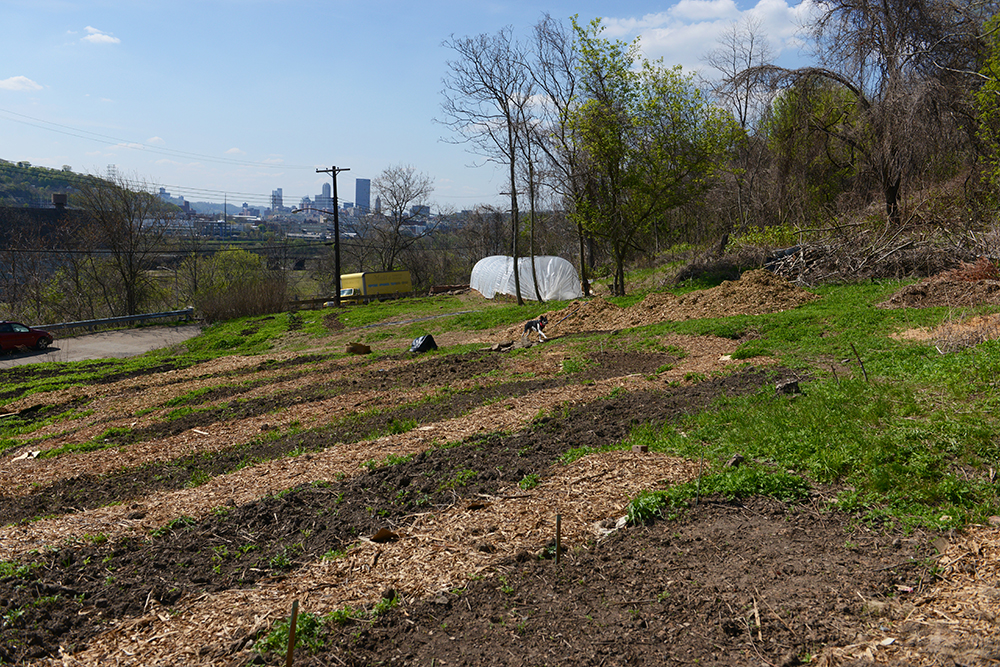 Spring at Hazelwood Urban Farms // www.WithTheGrains.com