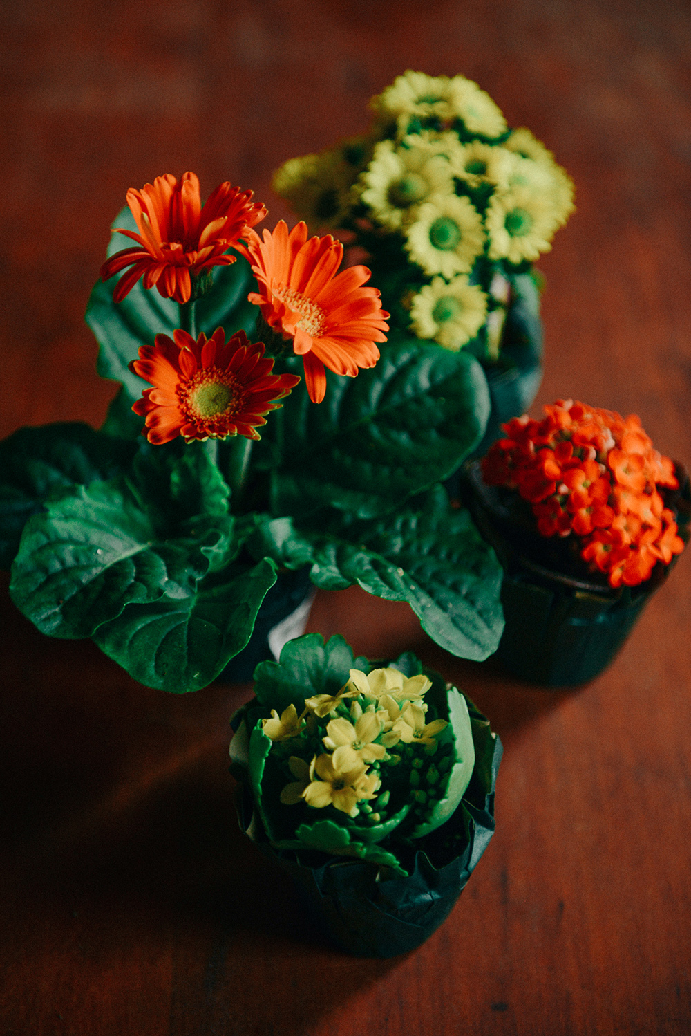 Flowers and Fruit by With The Grains 02