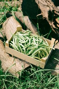 78-Green-Beans