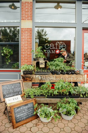 Seedling Sale at Caffe d'amore 01