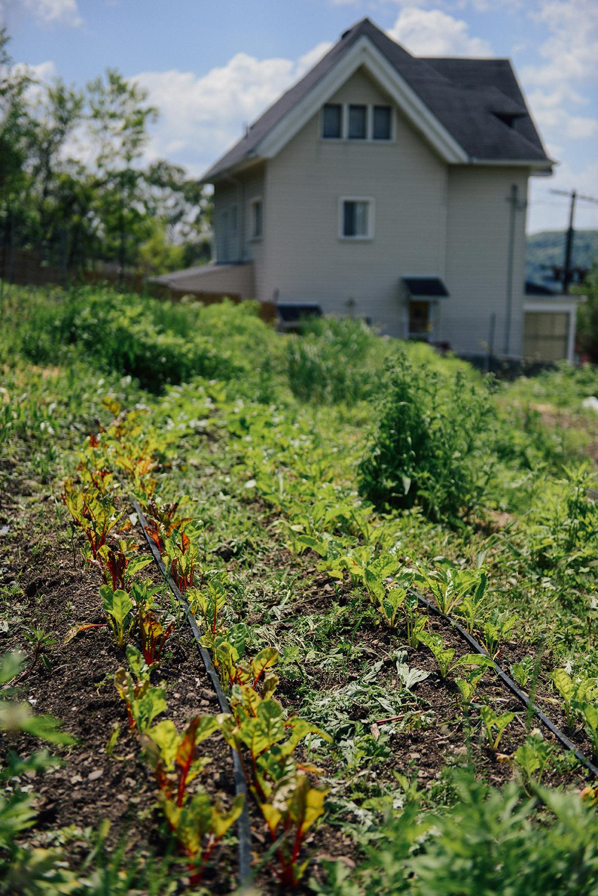 Spring at Hazelwood Urban Farms 02