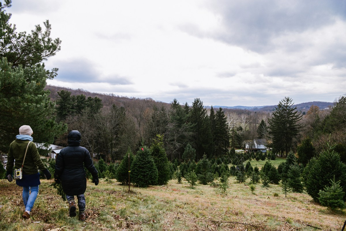 A Christmas Tree Farm & Peppermint Chocolate Cookies for Santa // www.WithTheGrains.com