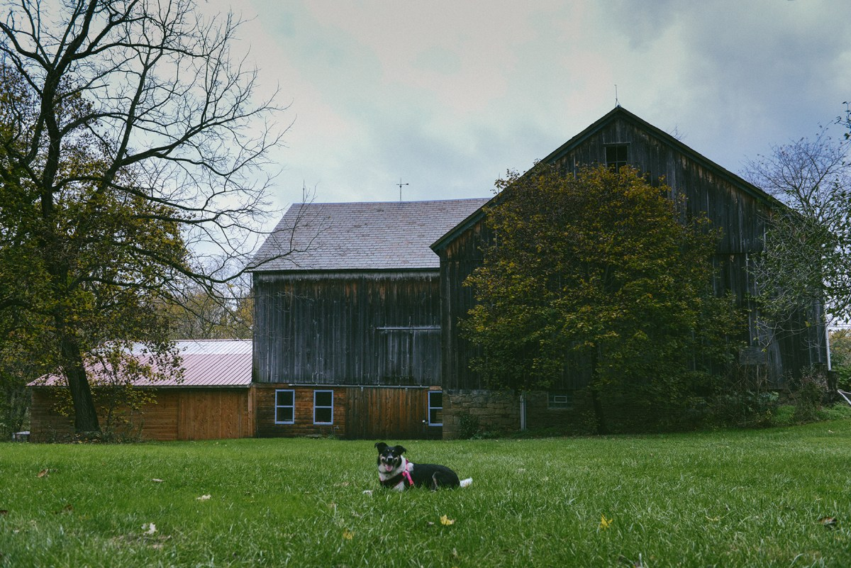 Kretschmann Family Organic Farm (Plus, A Puppy!) // www.WithTheGrains.com