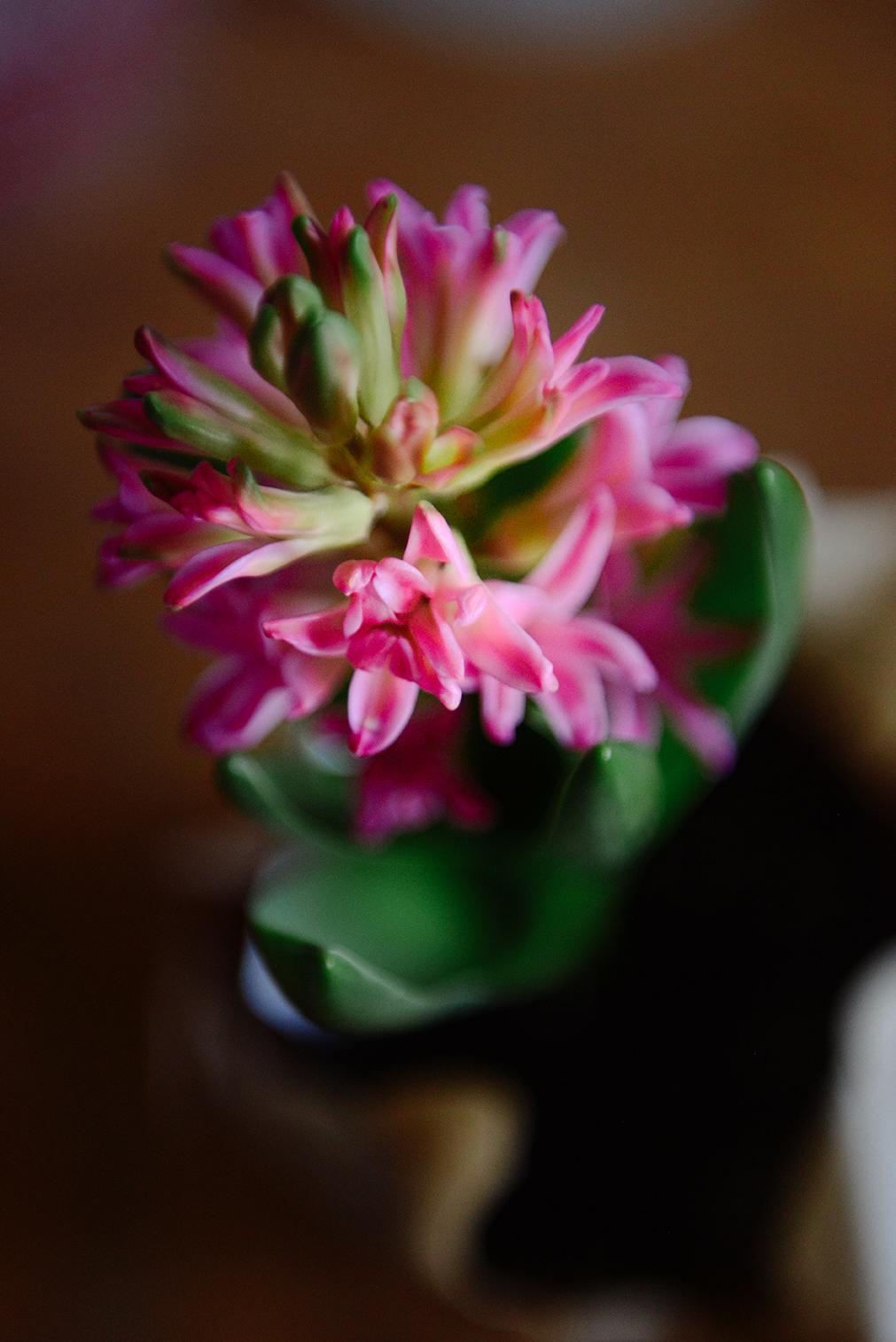 Spring Hyacinth // www.WithTheGrains.com
