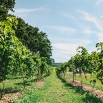 Lake Erie Wine Country and Westfield, NY