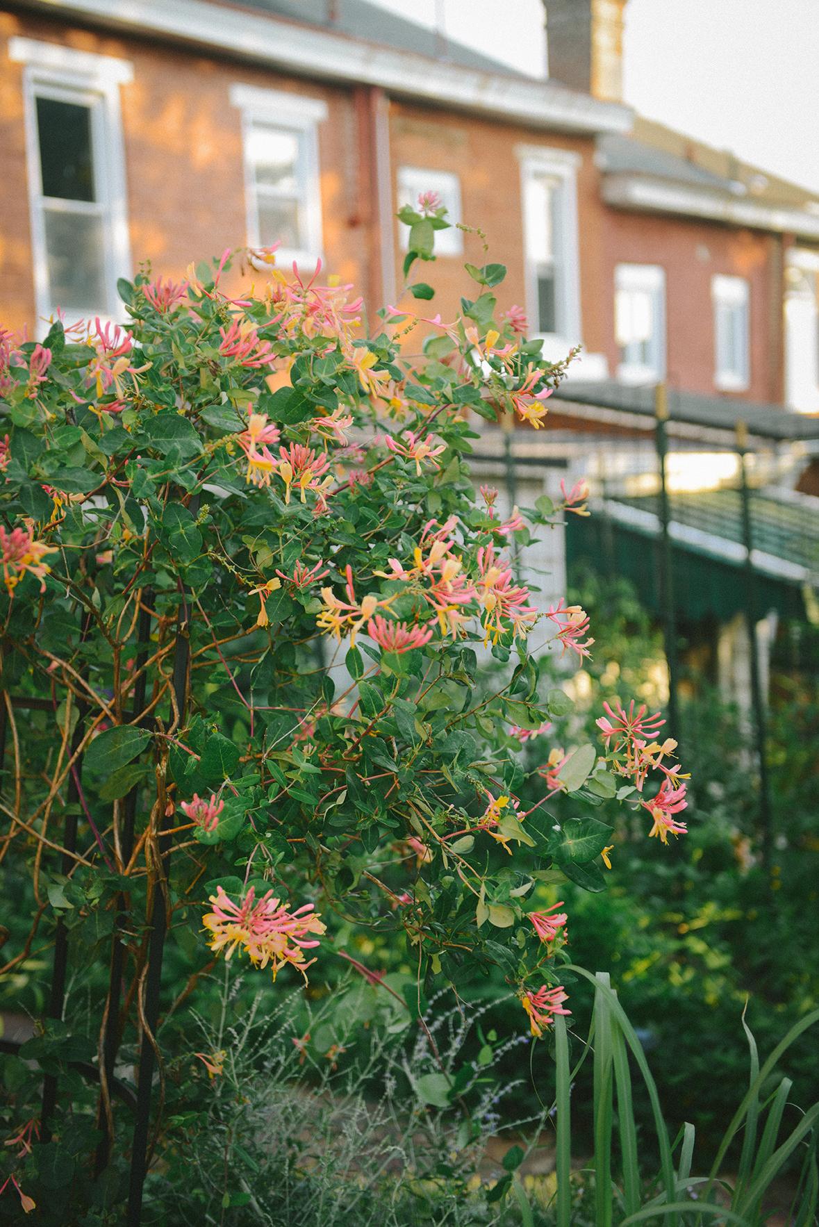 The Summer Garden // www.WithTheGrains.com