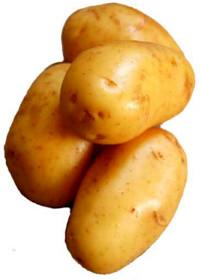The Botany of Desire Potatoes