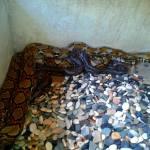 Turtle Island Snakes