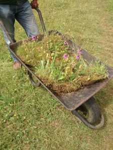 Wheelbarrow with orchids