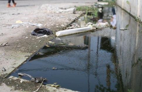 Pests breeding stagnant drain.