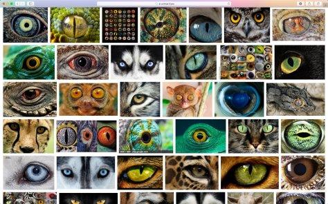 ตาของสัตว์แบบต่างๆครับ