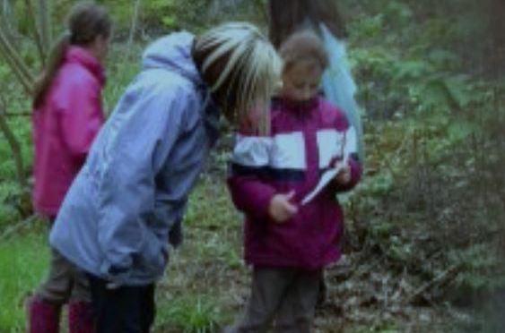 Woodland Wonders!  Little Wonders   activities