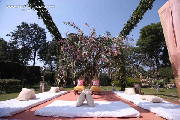 the-mandap-under-a-tree