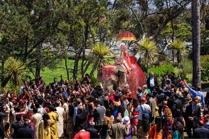 Fun new entry ideas for Indian Grooms | Indian groom entry ideas | Groom enters on an elephant | Curated by witty vows