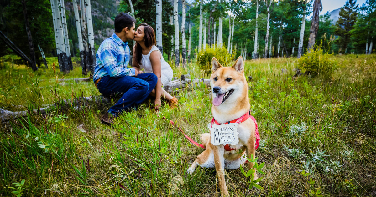 Shipra and Sumer | a real pre wedding shoot in the states | indian couple pre wedding shoot by Nathan in a park or forrest | Indian pre wedding shoot with the dog |my humans are getting married | Indian couple adorable moment kiss in the park