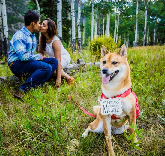 Shipra and Sumer   a real pre wedding shoot in the states   indian couple pre wedding shoot by Nathan in a park or forrest   Indian pre wedding shoot with the dog  my humans are getting married   Indian couple adorable moment kiss in the park
