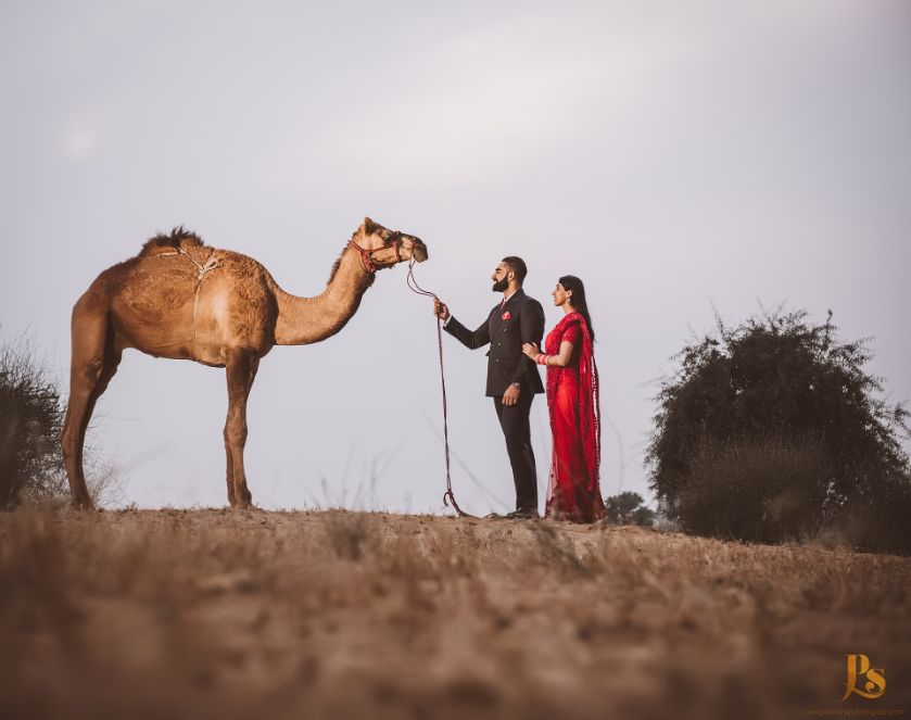 couple poses with camel   indian wedding diaries