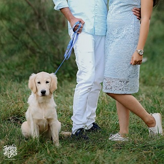 pre wedding shoot with your dog