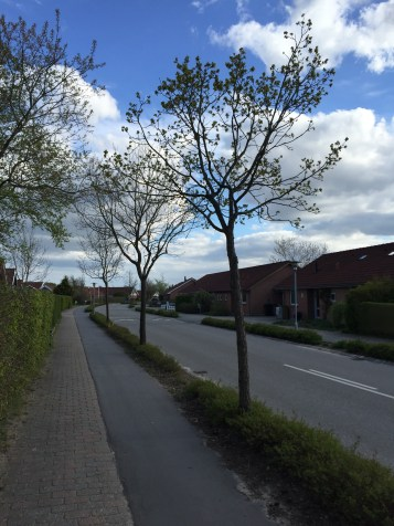 A typical suburban street.