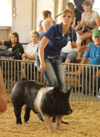 1st in Barrow Classes at Henry & Rock Island County Fairs. Photo Credit: Henry County Fair Board