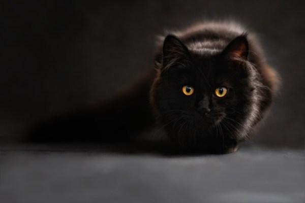 スピリチュアル、透視と霊視のイメージ画像として猫