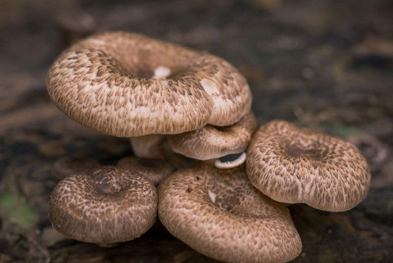Mushroom Allergy symptoms treatments and tests