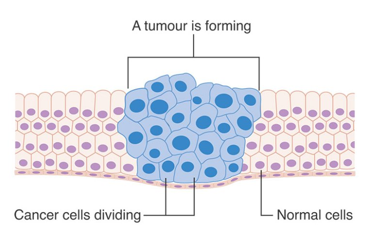 Cancer-cells-reproducing
