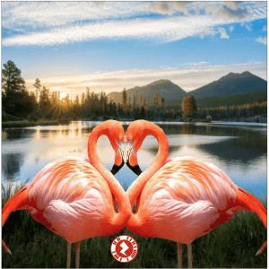 Love Zapz 'Flamingo Love' Valentine's Augmented Reality Greeting Card