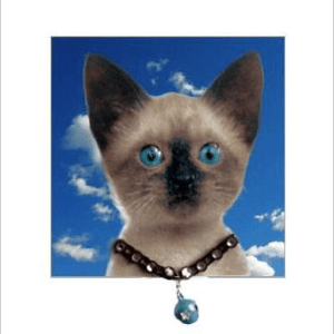 Siamese Cat Kitten Posh Pawz Greeting Card