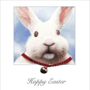 Posh Pawz Rabbit Easter Card