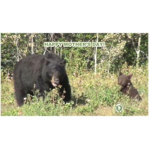 AR Bears Mother's Day Greeting Card