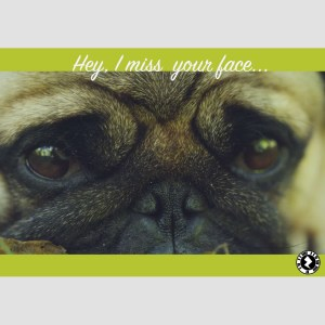 Pug AR Greeting Card I Miss Your Face