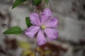 bloemen23