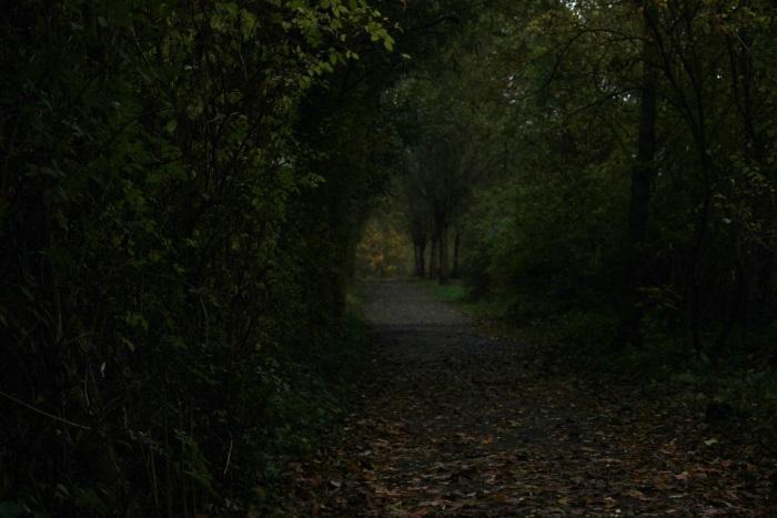 Het spookbos