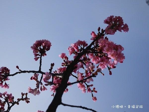 [♡格聚♡-陽明山上很粉嫩,甜蜜蜜賞櫻去!!] @小環妞 幸福足跡