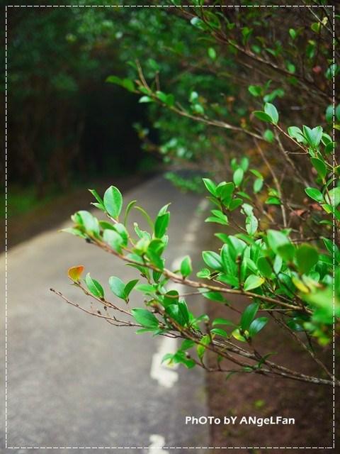 [玩♡苗栗]南庄。揭開大自然神秘的面紗。向天湖 @小環妞 幸福足跡