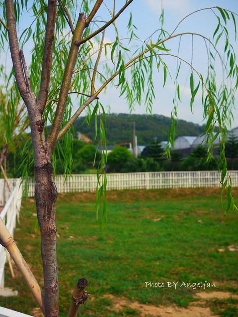 [玩♡苗栗]通宵。讓狗狗恣意地在草原上奔馳吧!!!寵物餐廳~100號牧場 @小環妞 幸福足跡