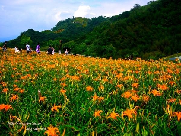 [花蓮景點推薦] 六十石山金針花。舖上黃色的地毯,台灣小瑞士 @小環妞 幸福足跡