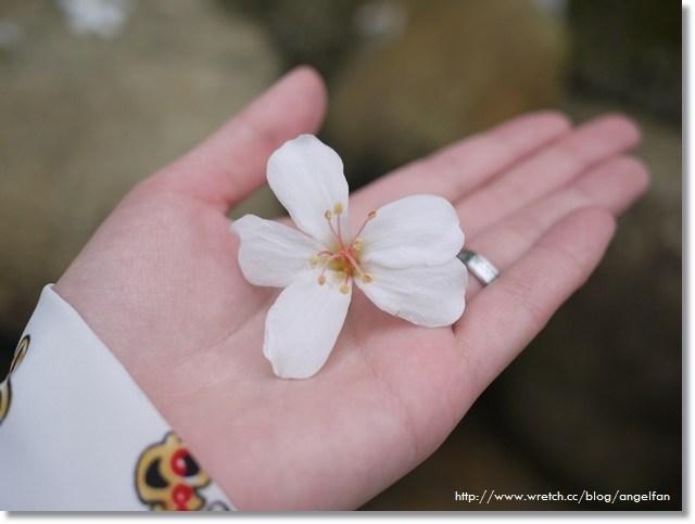 [苗栗賞桐花]˙四月雪紛飛,鋪上一層白色的地毯 ♥ 客家大院桐花公園 (4/13花況) @小環妞 幸福足跡