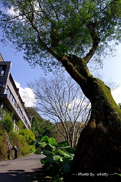 三峽 大阪根,三峽一日遊,三峽旅遊景點,三峽景點推薦,大阪根森林 @小環妞 幸福足跡