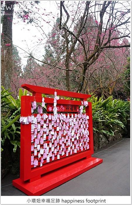 【過年旅遊推薦】九族櫻花祭2015,南投九族文化村賞櫻迎春去!(2.8花況) @小環妞 幸福足跡