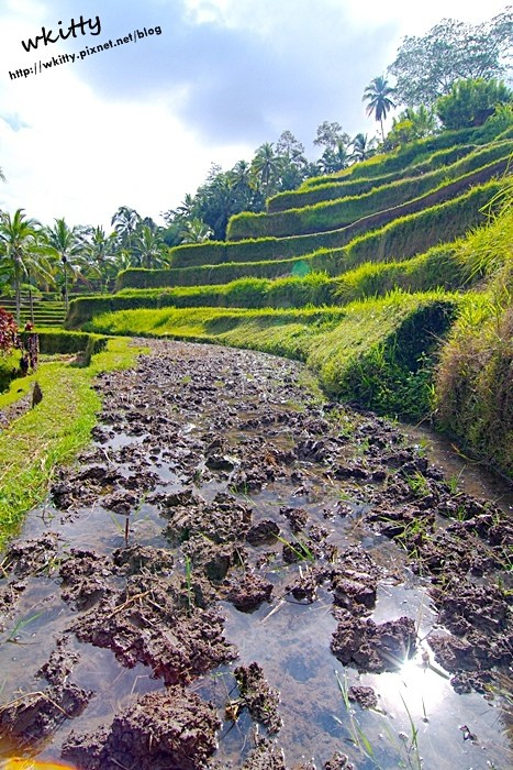 【峇里島必去景點(26)】tegallalang德哥拉朗梯田,曾榮登國際旅遊雜誌封面的漂亮景緻! @小環妞 幸福足跡