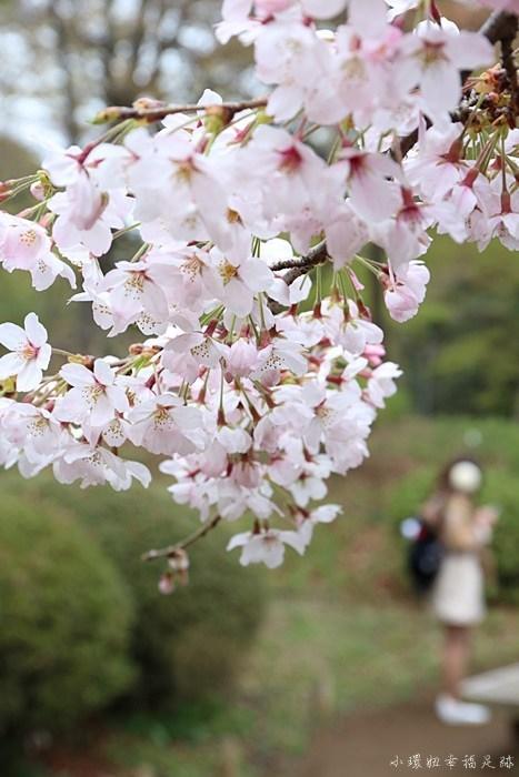 【東京賞櫻地點推薦】六義園,大枝垂櫻聞名,夜櫻也很美 @小環妞 幸福足跡